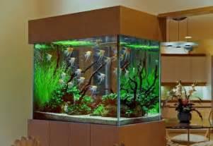 home fish tanks cool fish tanks pets at home cool aquariums 10 fish