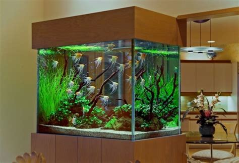 custom fish tank designs for freshwater aquariums