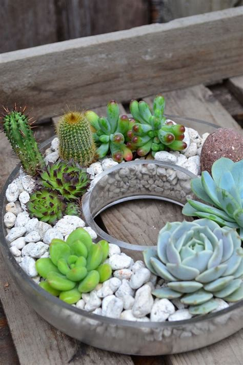 Where To Buy Planters Near Me 371 Best Gardening With Succulents Images On
