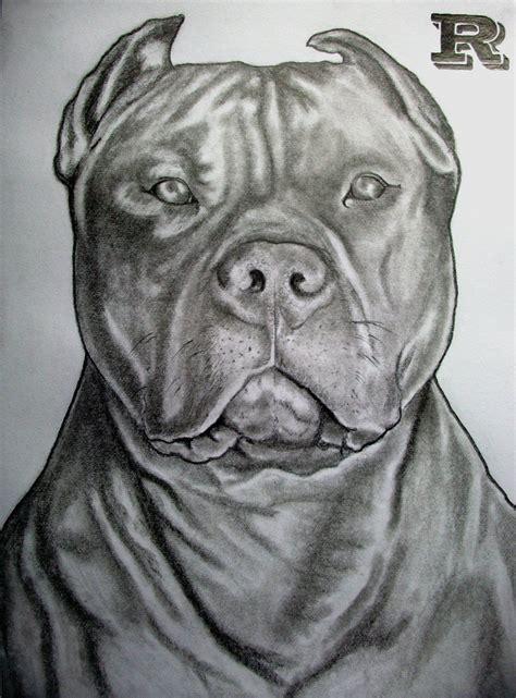 pitbull tattoo design pitbull drawing ideas insperation drawing