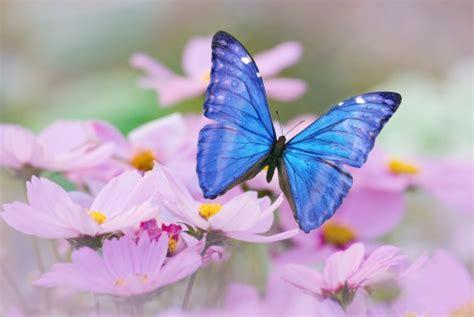 foto farfalle e fiori guerriero della luce farfalle immagini