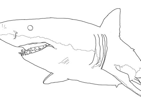 great white shark coloring pages great white shark