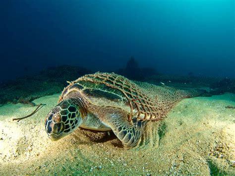 as bp turtle bd twiss 3 4 new korean style bsh207 gambar menarik kehidupan dasar laut terowong informasi