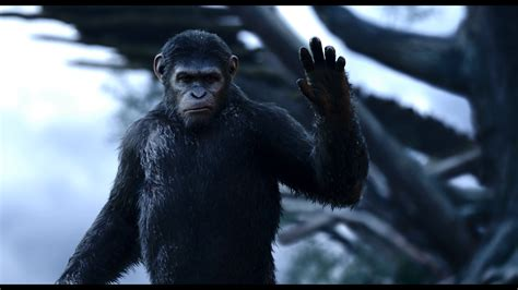 3d The Apes Of The Planet Of The Apes 2014 3d Bdremux