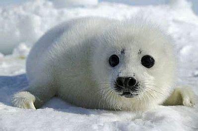 imagenes animales bebes banco de imagenes y fotos gratis animales salvajes bebes