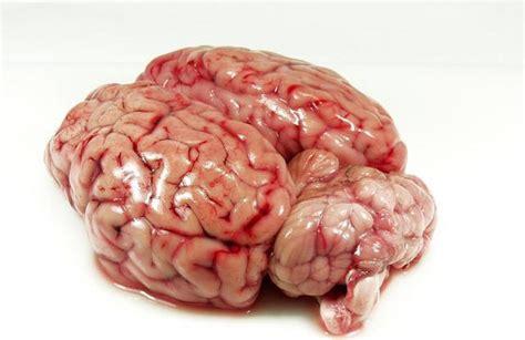 imagenes de el cerebro humano 191 bebes alcohol en exceso mira lo que le pasa a tu cerebro