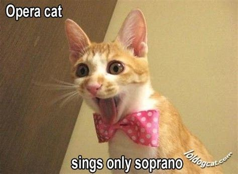 56 best images about lol pets lol cats lol dogs on