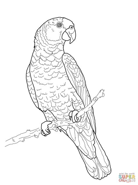 imperial amazon parrot coloring online super coloring