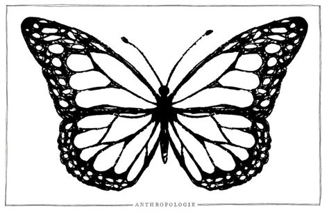 coloring pages of big butterflies big butterfly coloring page the learning curve pinterest