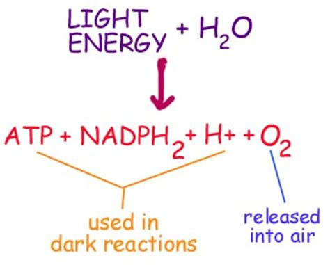 photosynthesis chemistry