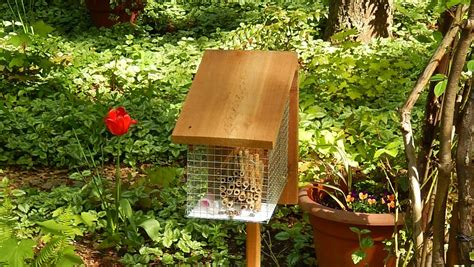 mason bee house build your own mason bee house boing boing