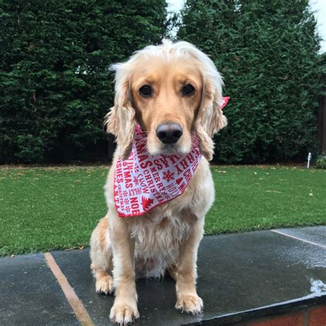 merry puppy cracker multibuy bandanas deals