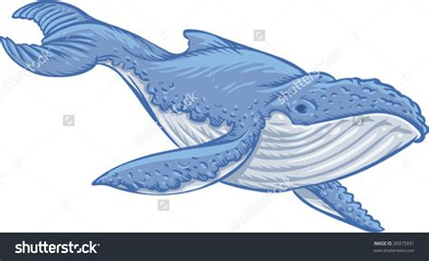 clipart blue whale clipground