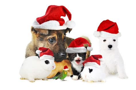 How To Decorate A House holiday household pet tips petswelcome com