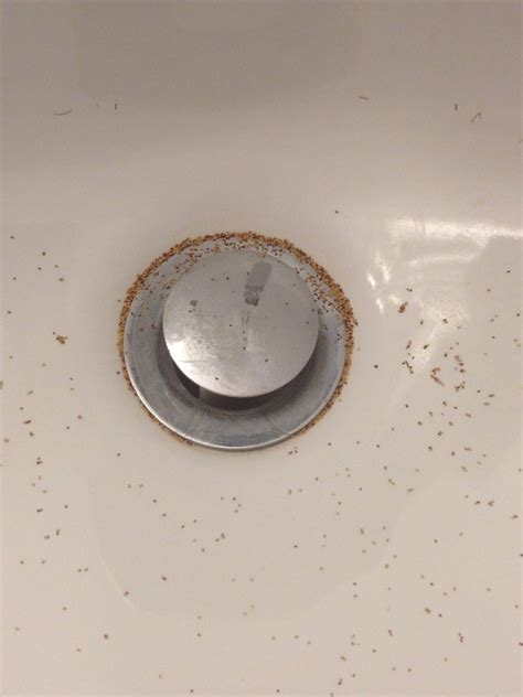 black poops in sink what s this in my bathroom sink almost every morning