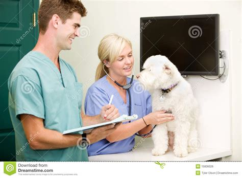 puppy check up vet check up royalty free stock image image 15836026
