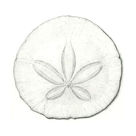 sarah melling pencils and paper sand dollar version 2 0