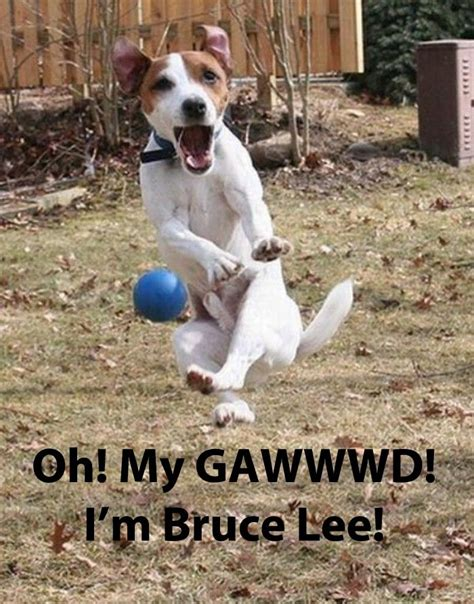 Pet Memes - 10 funny pet memes some pets v follow gwylio0148 or