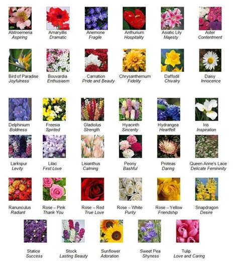 list of flowers flower descriptions and their meanings in