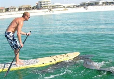 sanibel island bed and breakfast yolo boarding picture of yolo board adventures sanibel sanibel island tripadvisor