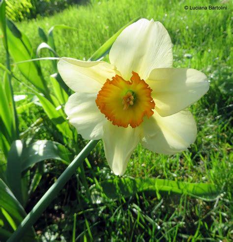 fiori iniziano con la a fiori famiglie iniziano con la lettera a b c d
