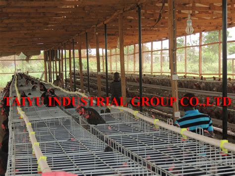 modern poultry house design taiyu factory egg layer chicken farm design battery cages