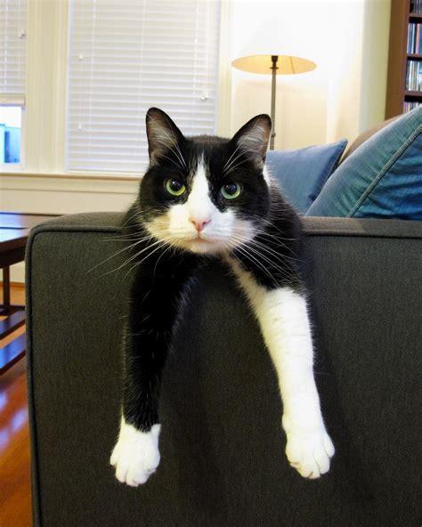 tuxedo kittens animal conscious