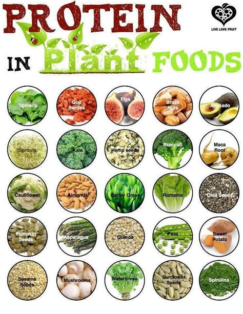 vegan af 20 easy to follow plant based recipes books protein in plants medicine