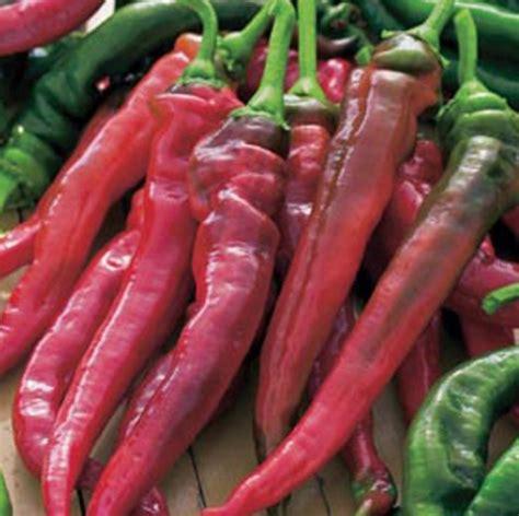 Benih Cabe Paprika benih paprika doux tres des landes jual tanaman