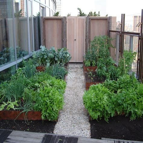 rooftop vegetable gardening container gardening growing vegetables in planters