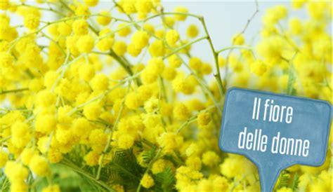 foto 8 marzo fiori linguaggio dei fiori la mimosa 232 donna non l 8