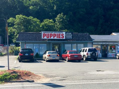 danbury pet shop owner charged with animal cruelty