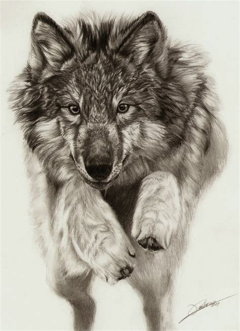 wolves drawings a beautiful wolf drawing wolf wolf