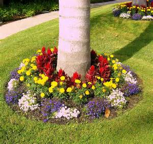 colorful tree base landscaping love s photo album