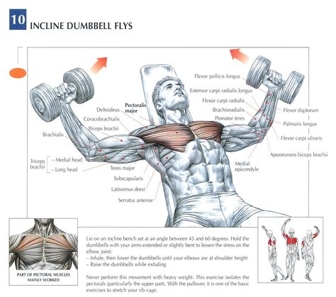 incline bench dumbbell fly 1000 images about weight lifting on pinterest chest