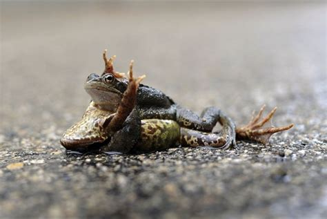 rane supreme la giornata dell acqua e i disegni vento