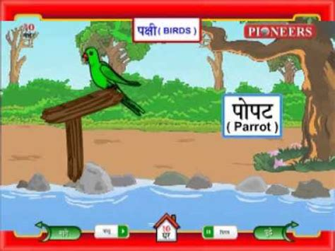 let s learn about unique birds let s learn about animals books let s learn marathi birds pakshi पक ष