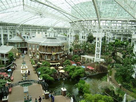 hotel in tennessee living at gaylord opryland resort picture of