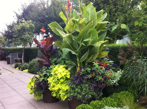modern tropical tropical landscape vancouver by