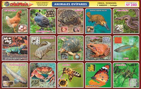 imagenes de animales viviparos chikipedia y chikilines l 193 minas escolares n 186 240