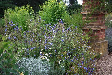 late flowering shrubs uk late summer flowering plants growing nicely