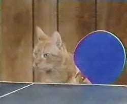 epic cat table table tennis cats