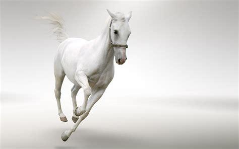 white horse running desktop wallpaper hd wallpaperscom