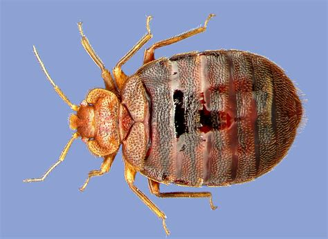getting high off bed bugs bringing bugs to the classroom makes everyone smarter