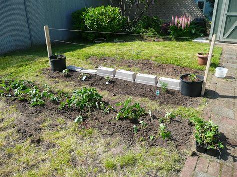 welche pflanzen im garten erdbeeren pflanzen erdbeeren aus dem eigenen garten