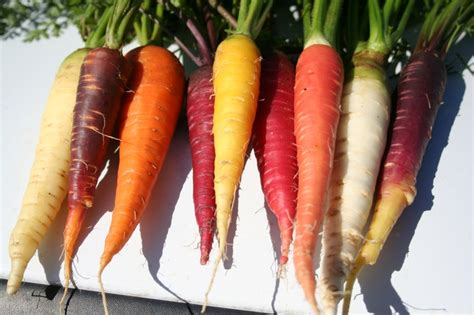 the carrot purple and other curious stories of the food we eat rowman littlefield studies in food and gastronomy books small farm news agriculture and resources blogs