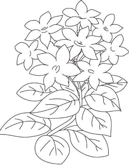Gambar Bunga Indah Hitam Putih - 39 Gambar Sketsa Bunga