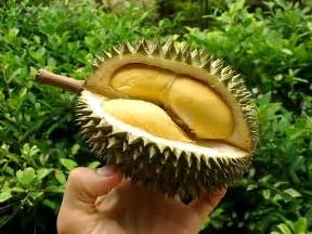 le durian du go 251 t 224 l odeur
