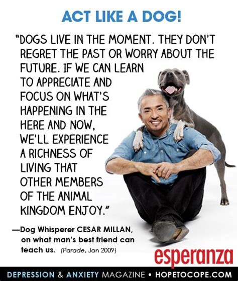 living well now and in the future why sustainability matters mit press books 17 best quotes about dogs on lover quotes