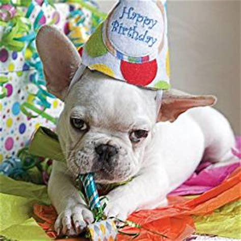 How To Make Cake Decorations At Home by French Bulldog Quot Birthday Party Quot Birthday Card Amazon Co